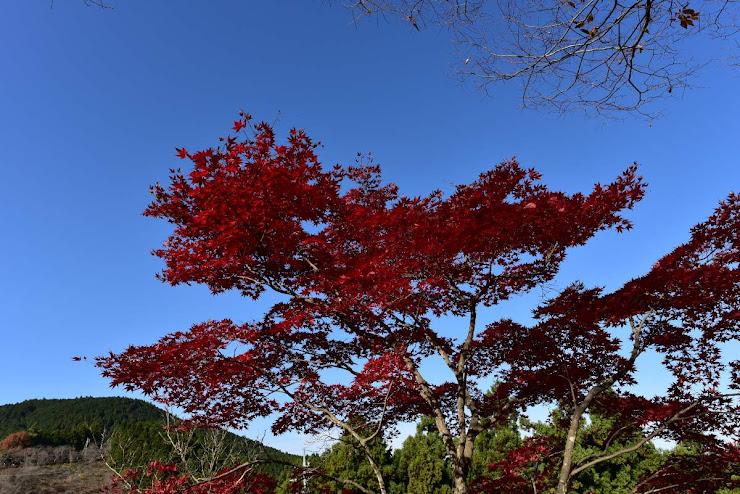 桜山公園の紅葉2