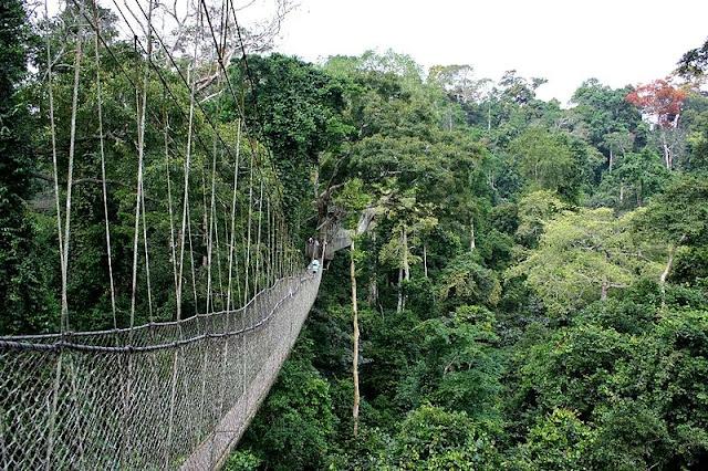 canopy walk di Taman Negara Gunung Tahan, Pahang, fobia berada di tempat-tempat tinggi, takut jambatan gantung