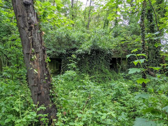 The WWII pillbox in Black Hut Wood