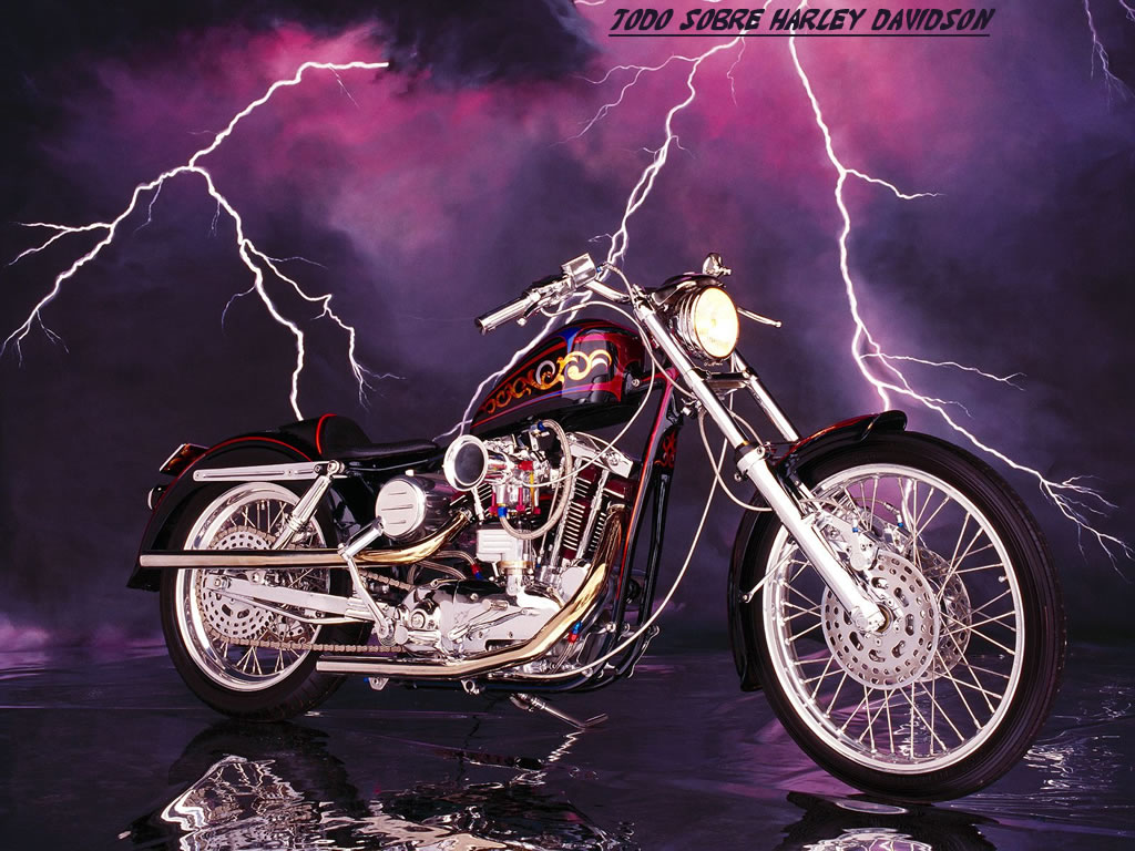 Funny Pictures Gallery Harley Davidson Harley Davidson