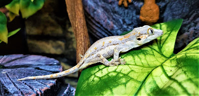 gecko gargola luz
