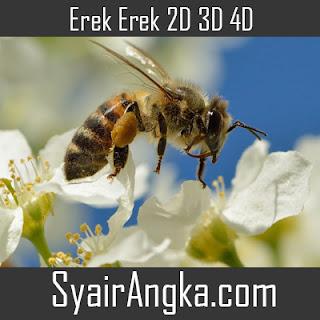 Erek Erek Lebah di Buku Mimpi 2D 3D 4D Lengkap