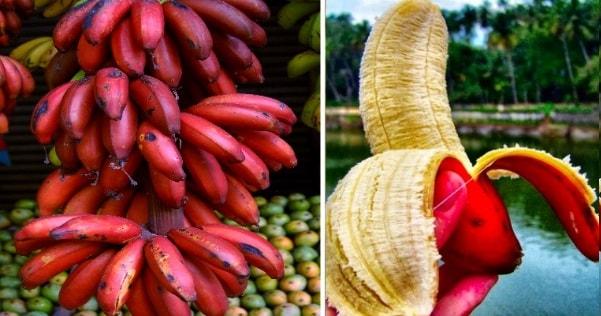 10 Amazing Health Benefits Of Red Banana (Better Than Yellow Banana!)