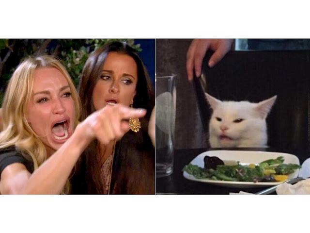 Come Donna che Urla ad un Gatto è diventato il Meme più Popolare del 2019