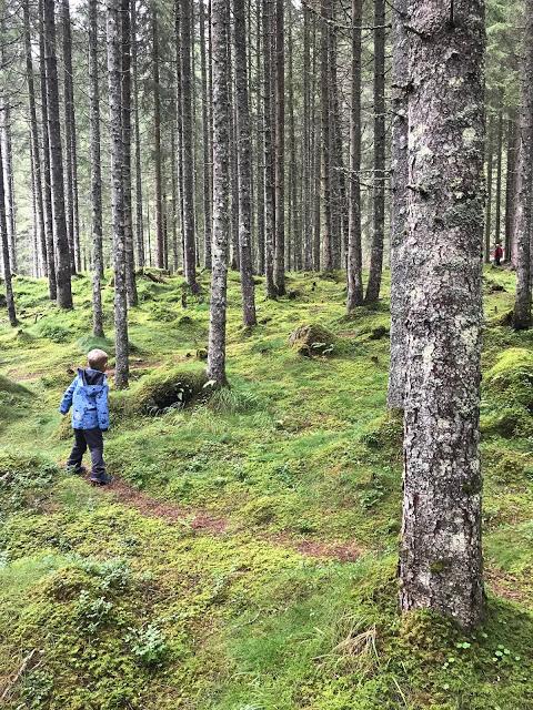 Wanderurlaub mit Kind Tipps Wald Jules kleines Freudenhaus