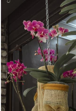 Vaso de orquidia