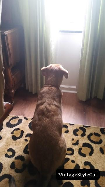 Waiting pup