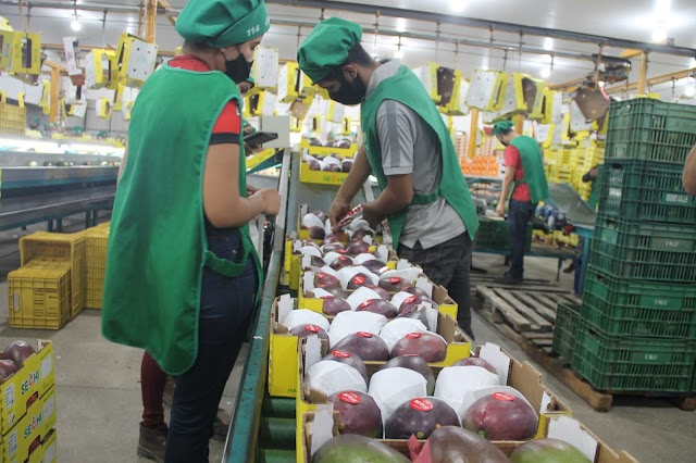 Leão destaca protagonismo da Bahia na geração de empregos no Nordeste: São mais de 81 mil em 2021