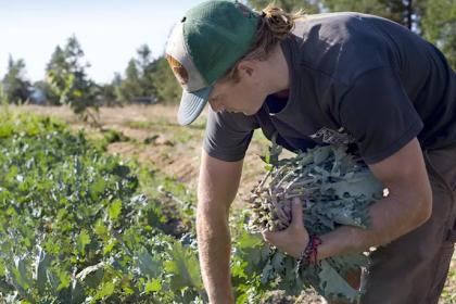 Hvordan Grow økologisk Kale