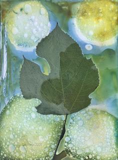 Wet cyanotype_Sue Reno_image 829