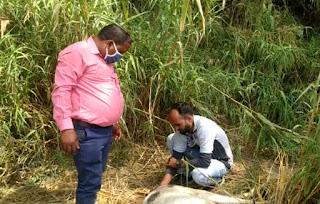 अज्ञात लोगों ने गौ माता का पीट-पीटकर किया बुरा हाल  | #NayaSaberaNetwork