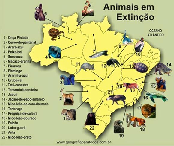 Mapa da fauna de animais em extinsão