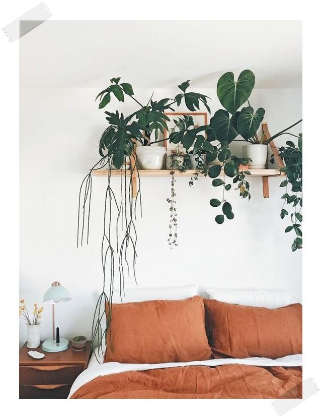 Decoración en la habitación con plantas