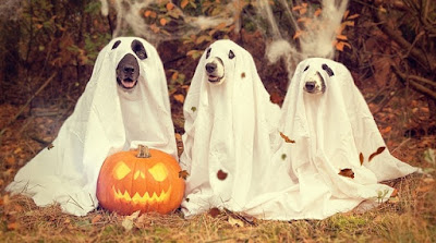 Easy Halloween Costume Ideas Dogs Dressed As Ghosts