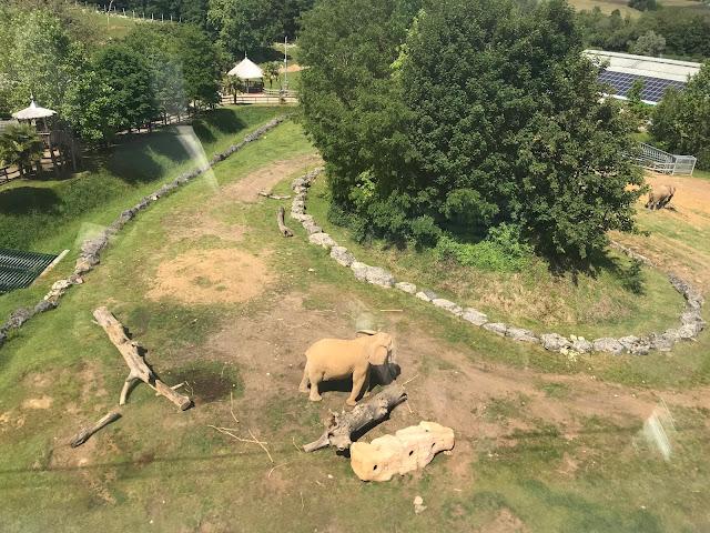 Zoo de beauval télécabine des éléphants