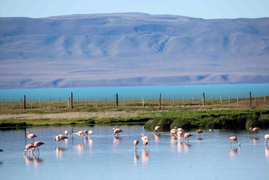 Reserva Laguna Nimez em El Calafate
