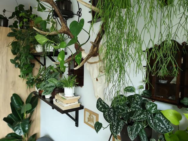 Roślinna rutyna #1 - Dostałam rośliny z robalami, czym nawożę i kąpiel Vandy