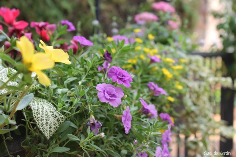 Nuestras plantas de temporada favoritas de primavera verano y de oto o invierno guia de jardin - Plantas de invierno ...