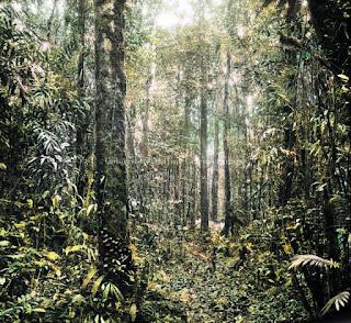 hutan hujan tapanuli di dairi