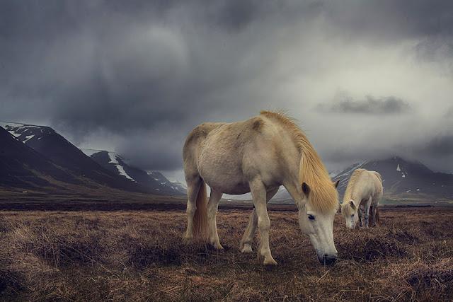 © Florian Ritter