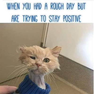 When you had a rough day.. #catjokes