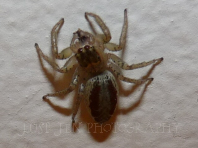 2011 Michigan Spiders