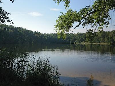 Der Lochower See mit Schilfrand