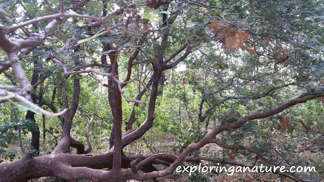 Bhimbetka- The Rock Shelters