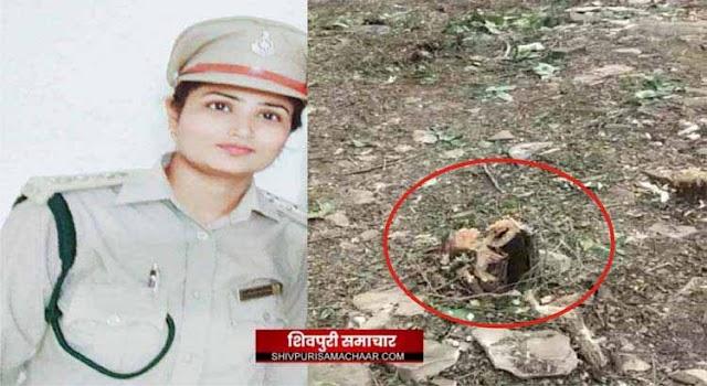 रक्षक बनी भक्षक: जंगल से लकडी भरकर ले जा रहा ट्रेक्टर पकड़ा, भेंट पूजा ली और छोड दिया | kolaras News