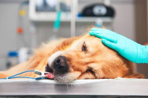 Jak opiekować się psem po operacji?