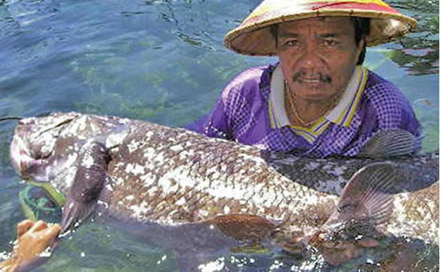 Coelacanth facts and Information 7