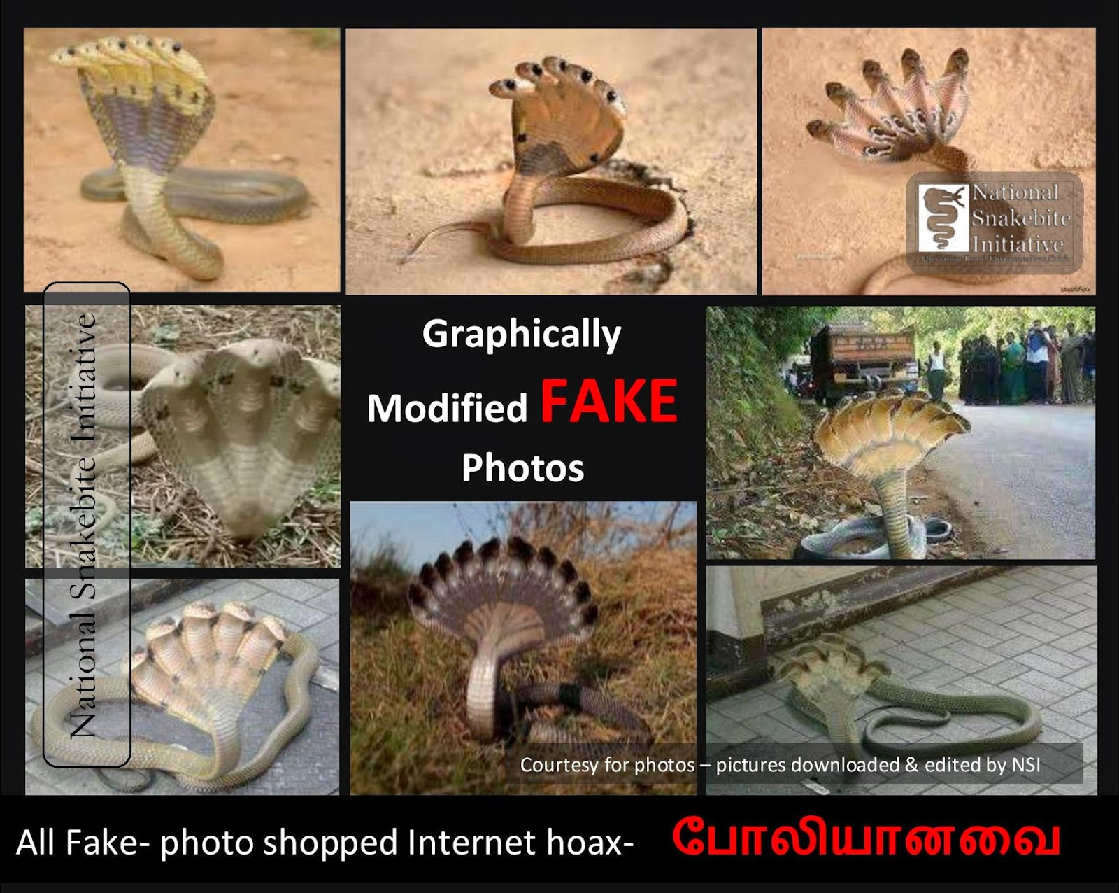 Myths on Snakes in India: Five Head Cobra - photo#19