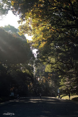 travelling-meiji-jingu-harajuku-japan