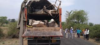 गौवंश से भरे 12 चक्का ट्रक पकड़ाया, डबल पाटेशन लगाकर भरे थे गौवंश