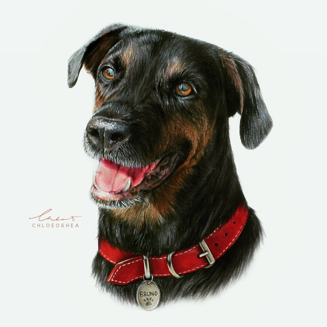 12-Bruno-the-Dog-Chloe-O-Shea-Realistic-Wind-Animal-Drawings-www-designstack-co