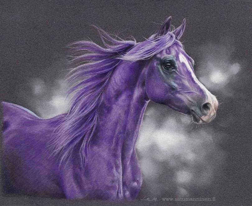 05-Purple-Horse-Satu-Manninen-www-designstack-co