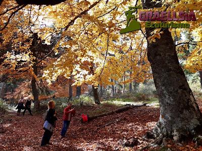 Bosque de Abantos