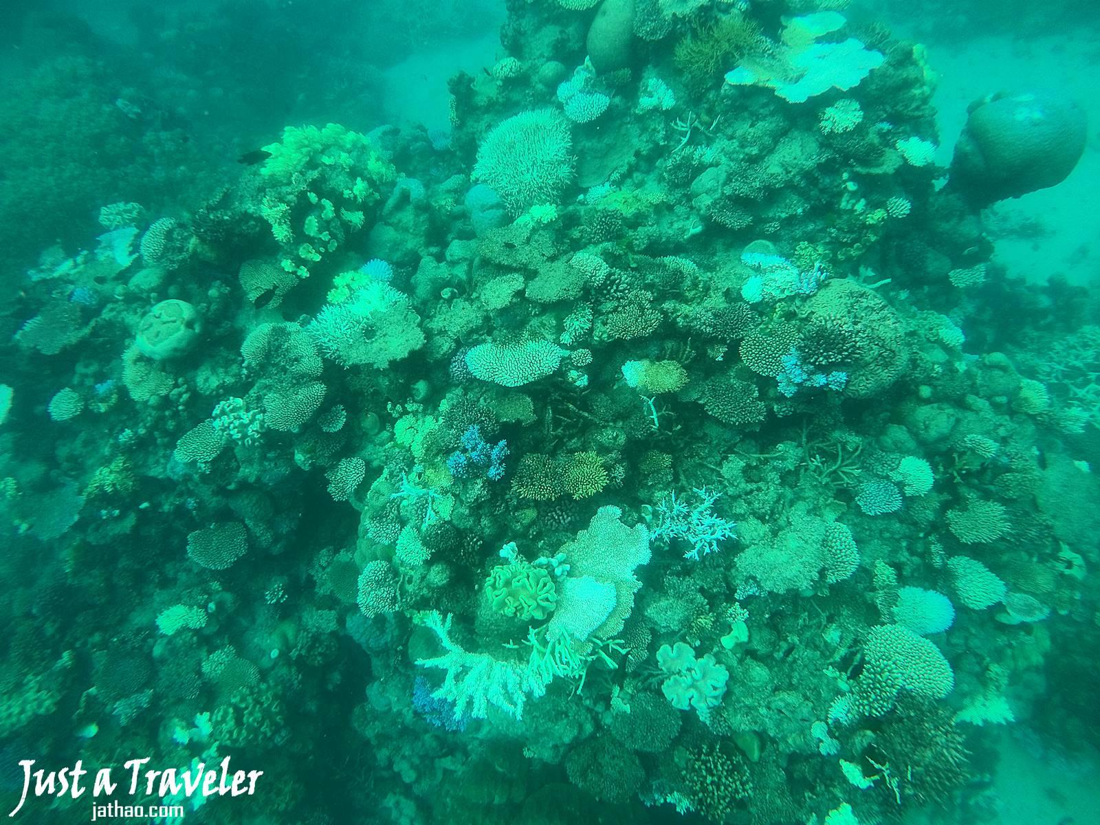 凱恩斯-大堡礁-外堡礁-推薦-公司-行程-旅遊-凱恩斯潛水-凱恩斯浮潛-自由行-澳洲-Cairns-Outer-Great-Barrier-Reef-Snorkel-Diving-Travel-Australia
