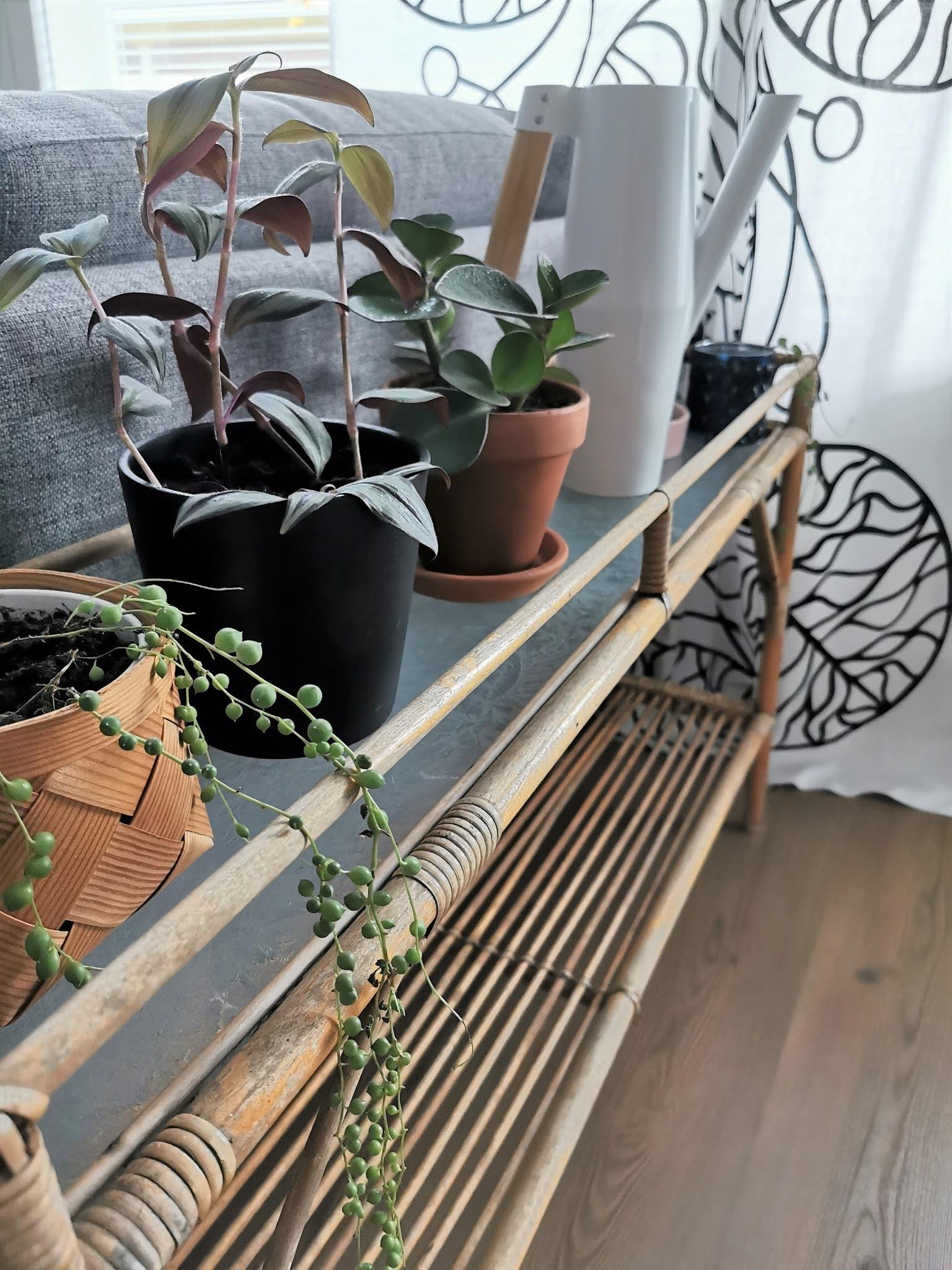 Rottinkinen kukkapöytä