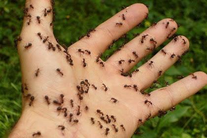 Rumah Anda Banyak Semut? Simak Tips Mengatasi Semut Dari Bahan Alami Yang Mudah Didapat