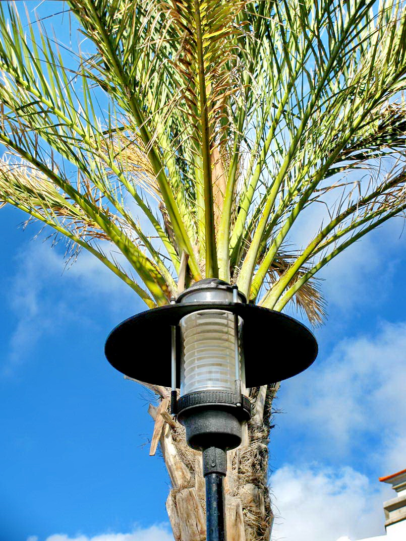 a lamp with a palm