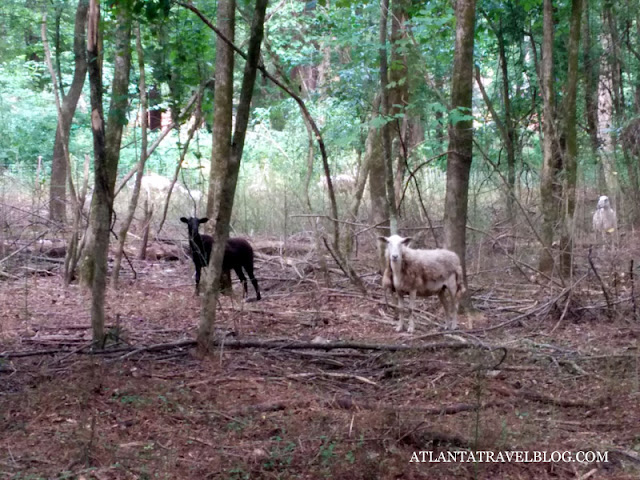 https://1.bp.blogspot.com/-Scv4RWDBnV8/WA_cR1rGfcI/AAAAAAAAIFg/UQJS-5Z0B0YBXQyp5Y13-S9JPw3jsAHGwCLcB/s640/sheep-gardeners-002.jpg