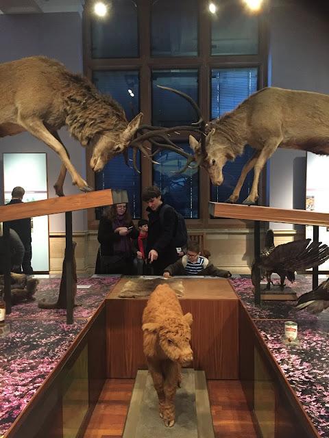 Scottish Wildlife in the Kelvingrove Art Gallery & Museum, Glasgow, Scotland