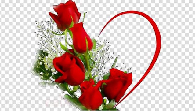 bunga mawar indah