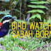 Bird Watching in Sabah Borneo