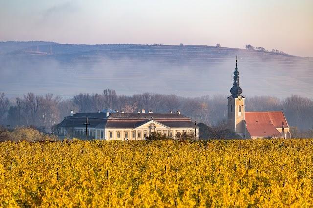 +++ WeinPresse | Das älteste Weingut der Welt…?