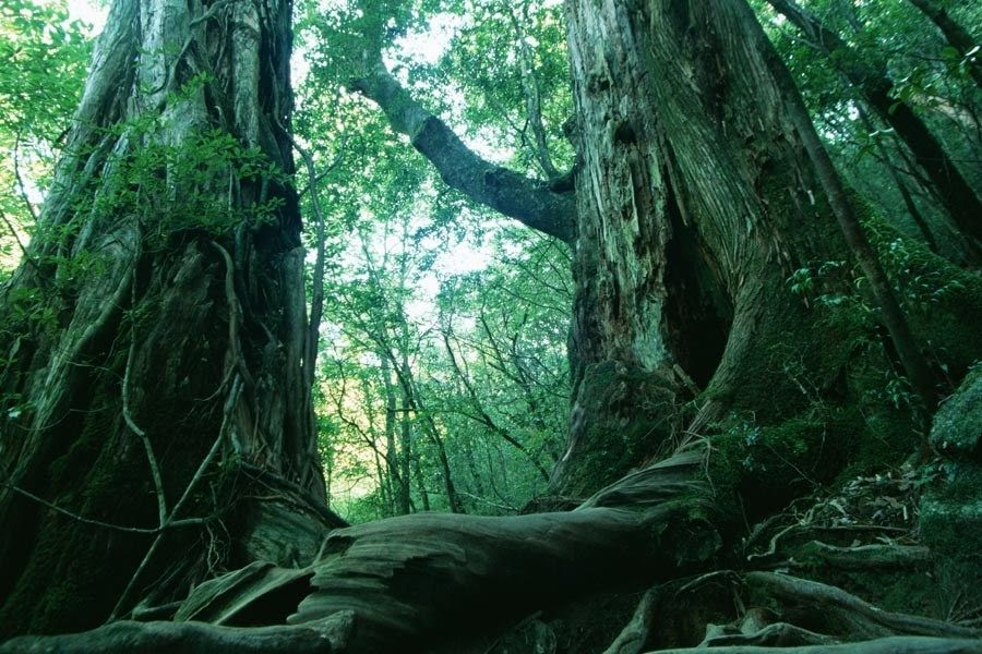 aokigahara-pelicula
