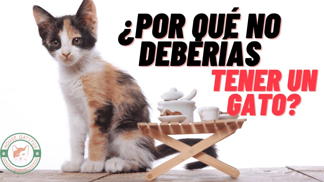 No deberías tener un gato como mascota y yo te doy mi punto de vista para que  evites adoptar o comprar a uno de estos animales.