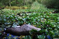 Mare à Piat, Forêt de Fontainebleau