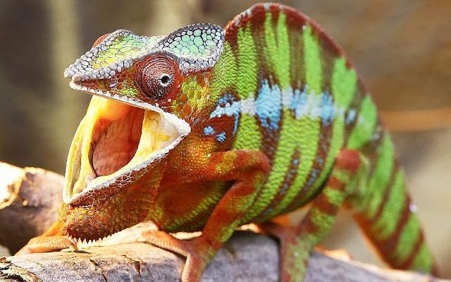 spy-chameleon